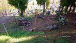 b_150_100_16777215_00_images_malopolskie10_swisnicz312.JPG