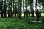 b_150_100_16777215_00_images_malopolskie_czarne53.jpg