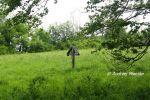 b_150_100_16777215_00_images_malopolskie_czarne53f.jpg
